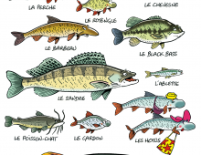 Mes poissons 1