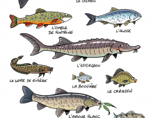 Mes poissons 3