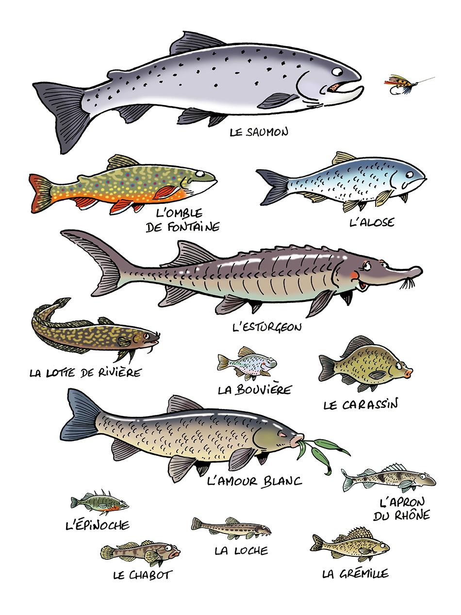 mes-poissons-003