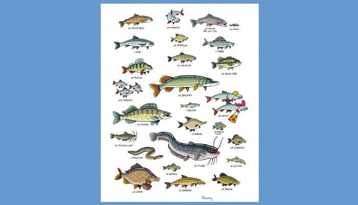 poster poster poissons