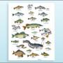 vignette-poster-poissons-v2