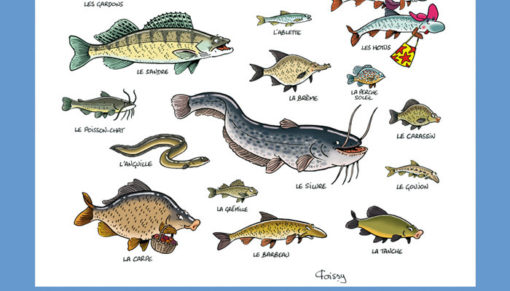 zoom poster poissons 2