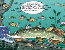 Brochet et internet